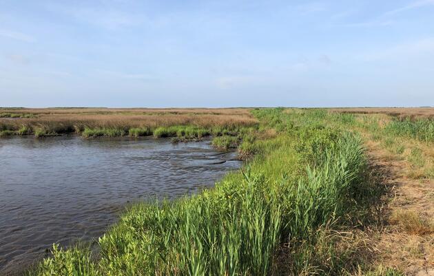 Raising the Bar for Salt Marshes on Deal Island