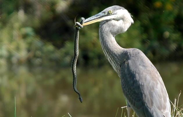 Pickering Creek Audubon Center