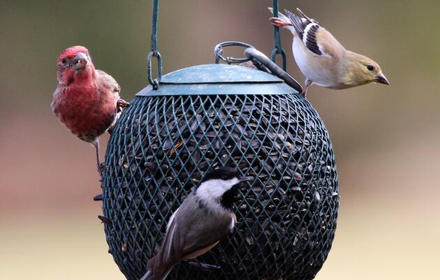 Mysterious illness affects birds in the District of Columbia, Maryland, Pennsylvania, Virginia and West Virginia