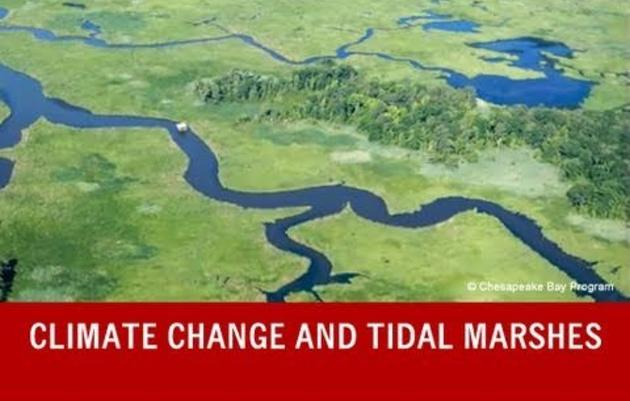 Climate Change Adaptation in a Maryland Important Bird Area