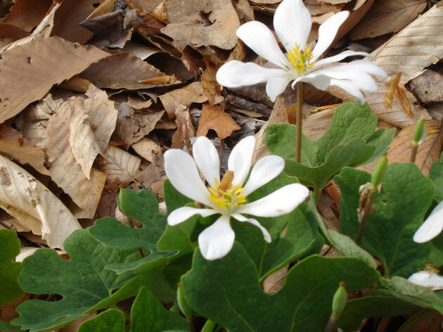 Celebrate Native Plant week on the 51st Anniversary of Earth Day
