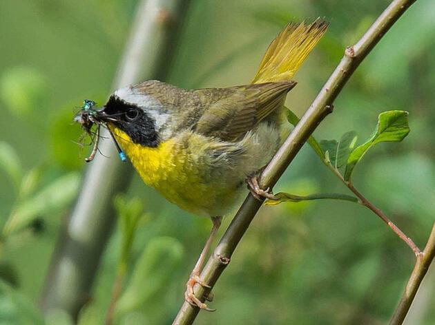 Audubon Mid-Atlantic New Beginnings