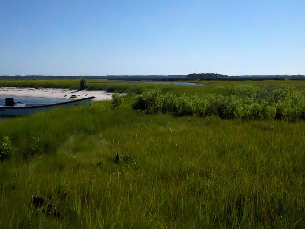 Sign-up for Saltmarshes
